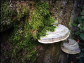 Pilze und Moos an Baumstamm