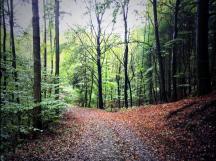 Waldweg im Frühherbst