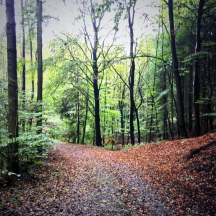 Waldweg im Frühherbst